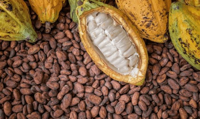 cocoa price in nigeria