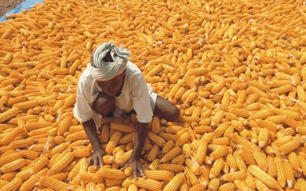 prices of commodities in nigeria maize