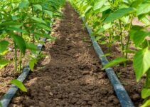 Cost of Drip Irrigation System in Nigeria Per Acre