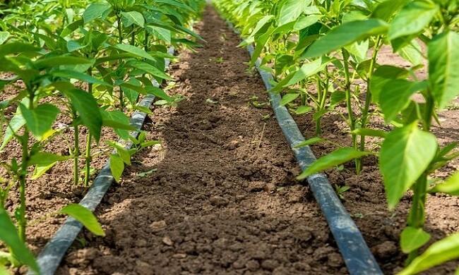 cost of drip irrigation in nigeria
