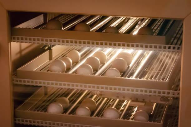Egg Incubator Prices in Nigeria