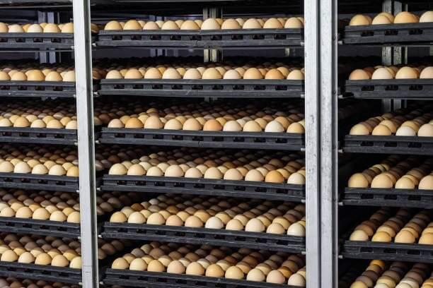 Cost of hatchery machine price in nigeria