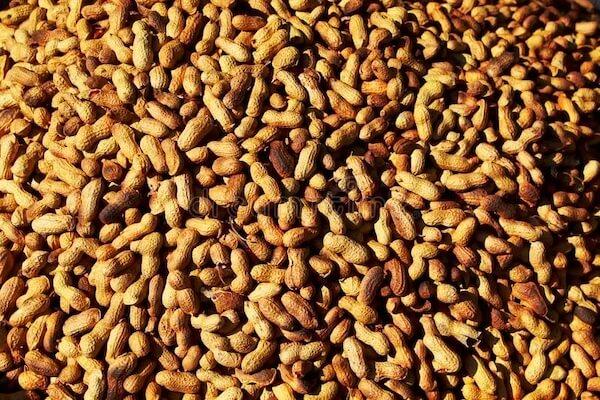 groundnut price in nigeria